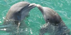 lely resort dolphins